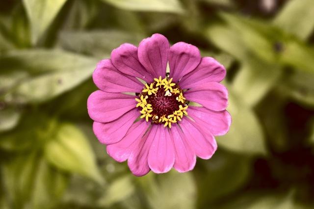 Mnt flower.jpg